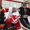 Red Wings vs Ducks: NHL Western Conference Betting Odds